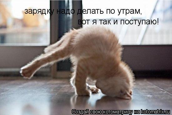 Котоматрица: зарядку надо делать по утрам,  вот я так и поступаю!