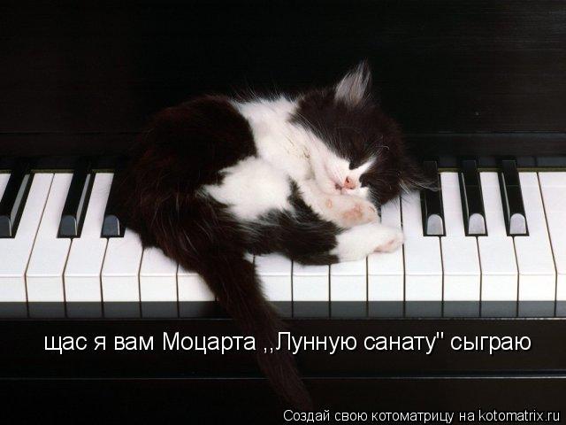 """Котоматрица: щас я вам Моцарта ,,Лунную санату"""" сыграю"""