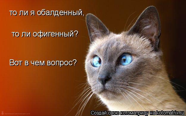 Котоматрица: то ли я обалденный, то ли офигенный? Вот в чем вопрос?
