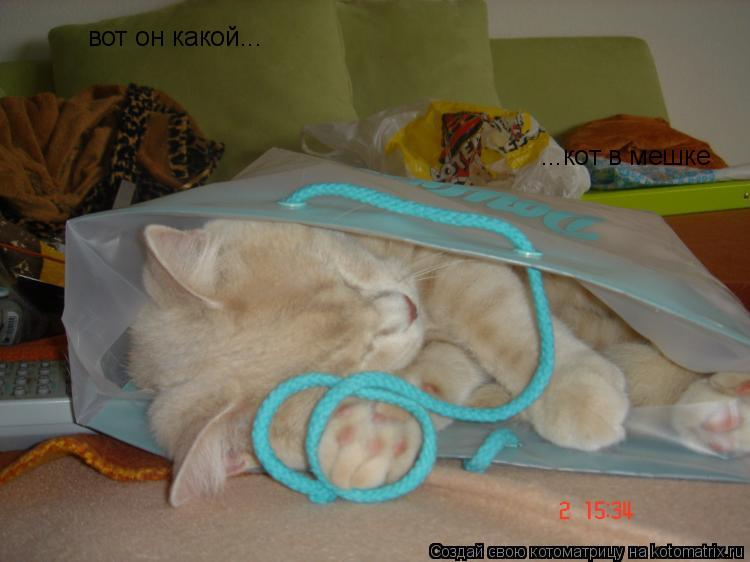 Котоматрица: вот он какой... ...кот в мешке