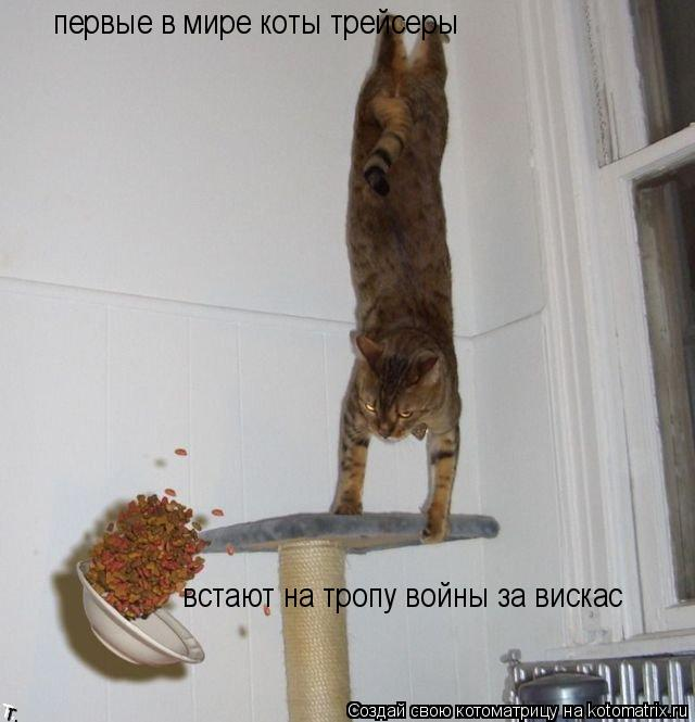 Котоматрица: первые в мире коты трейсеры встают на тропу войны за вискас