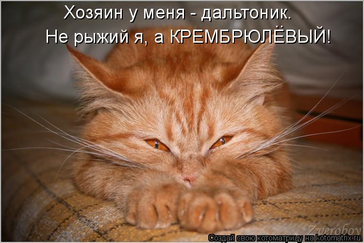 Котоматрица: Хозяин у меня - дальтоник. Не рыжий я, а КРЕМБРЮЛЕВЫЙ! ..