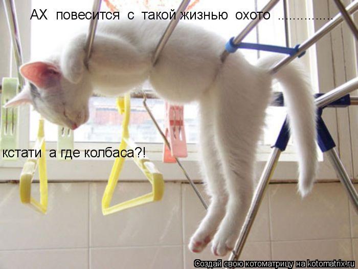 Котоматрица: АХ  повесится  с  такой жизнью  охото  ............... кстати  а где колбаса?!