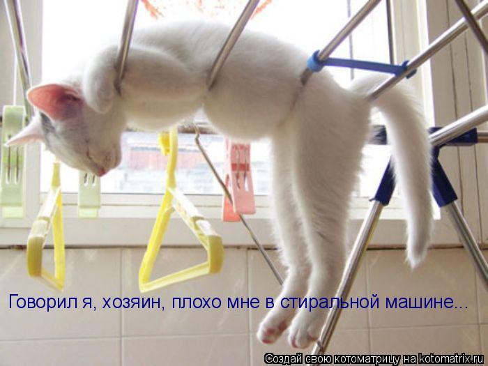 Котоматрица: Говорил я, хозяин, плохо мне в стиральной машине...