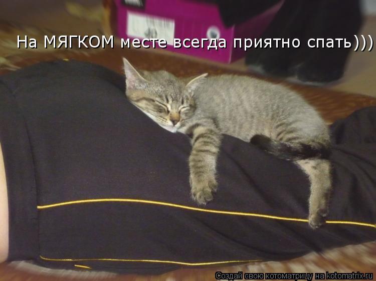 Котоматрица: На МЯГКОМ месте всегда приятно спать)))