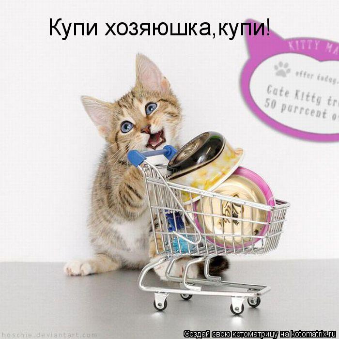 Котоматрица: Купи хозяюшка,купи!