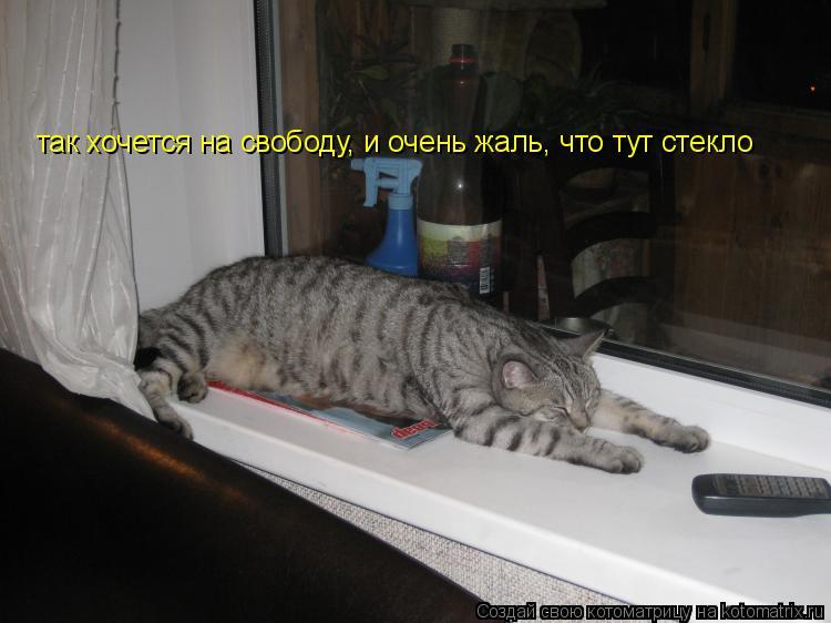 Котоматрица: так хочется на свободу, и очень жаль, что тут стекло
