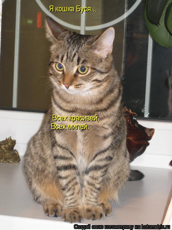 Котоматрица: Я кошка Буся... Всех красивей, Всех милей.