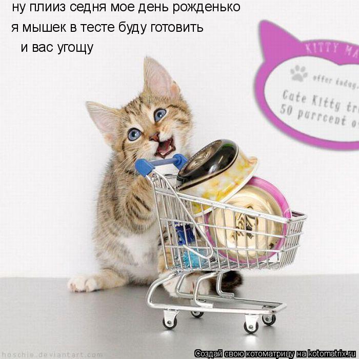 Котоматрица: ну плииз седня мое день рожденько я мышек в тесте буду готовить  и вас угощу