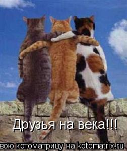 Котоматрица: Друзья на века!!!