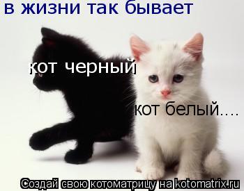 Котоматрица: в жизни так бывает кот черный кот белый....