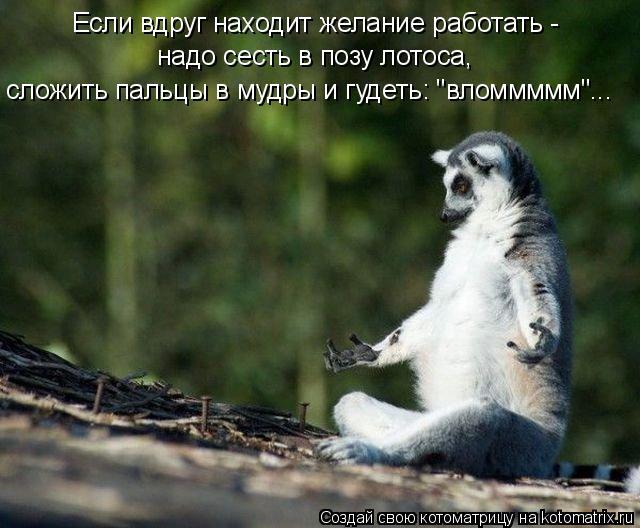 """Котоматрица: Если вдруг находит желание работать - надо сесть в позу лотоса, сложить пальцы в мудры и гудеть: """"вломмммм""""... Если вдруг находит желание рабо"""