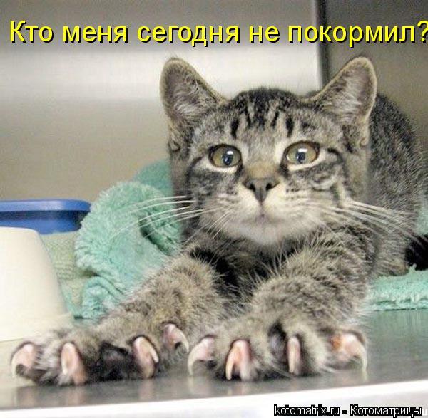 Котоматрица: Кто меня сегодня не покормил?