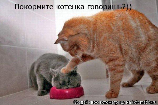 Котоматрица: Покормите котенка говоришь?))