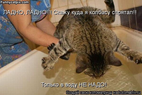Котоматрица: Только в воду НЕ НАДО! ЛАДНО, ЛАДНО!!! Скажу куда я колбасу спрятал!!