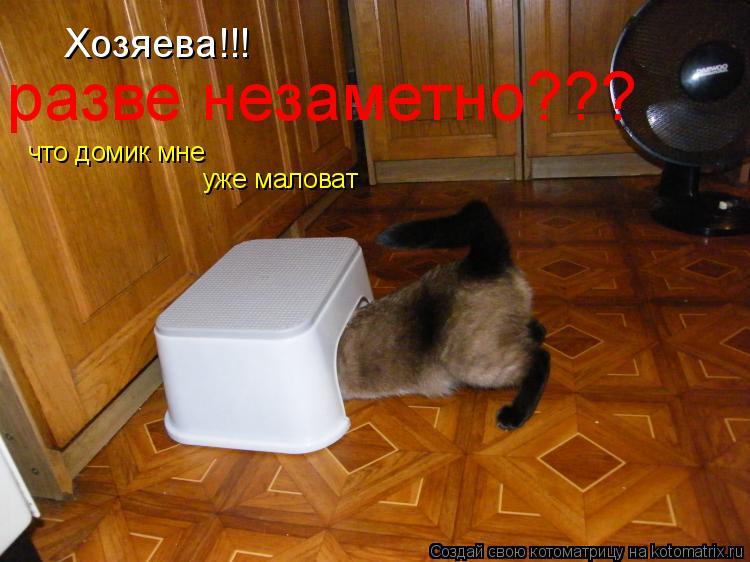 Котоматрица: Хозяева!!! разве незаметно??? что домик мне уже маловат