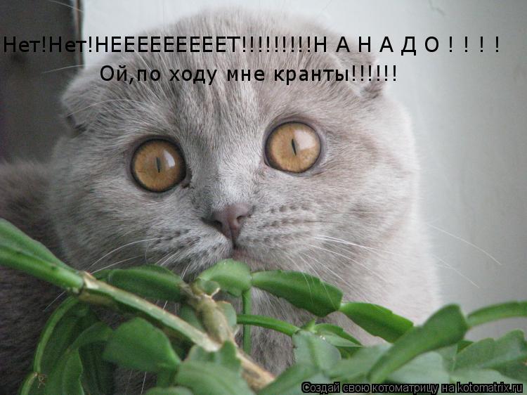 Котоматрица: Нет!Нет!НЕЕЕЕЕЕЕЕЕТ!!!!!!!!!Н А Н А Д О ! ! ! ! Ой,по ходу мне кранты!!!!!!