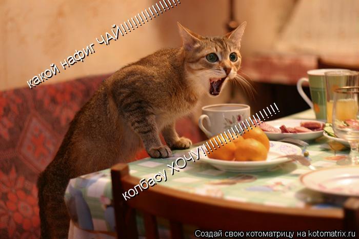 Котоматрица: какой нафиг ЧАЙ!!!!!!!!!!!!!!!! колбасу ХОЧУ!!!!!!!!!!!!!!!!!!!!!!