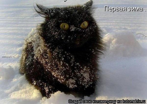 Котоматрица: Первая зима ...