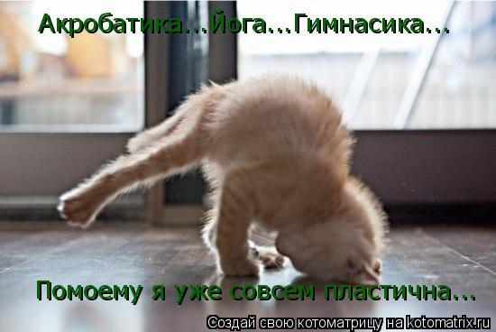 Котоматрица: Акробатика...Йога...Гимнасика... Помоему я уже совсем пластична...