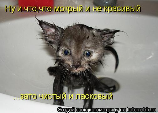 Котоматрица: Ну и что,что мокрый и не красивый ...зато чистый и ласковый
