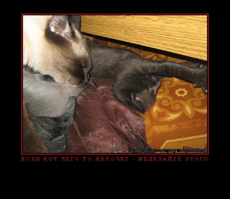 Котоматрица: Если кот чего то нехочет - неделайте этого