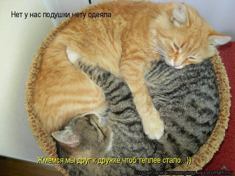 Котоматрица: Нет у нас подушки,нету одеяла Жмемся мы друг к дружке,чтоб теплее стало...))