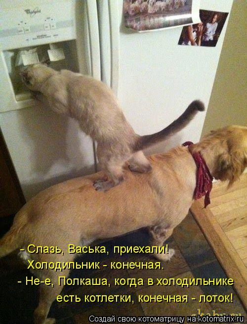 Котоматрица: - Слазь, Васька, приехали!   Холодильник - конечная.  - Не-е, Полкаша, когда в холодильнике  есть котлетки, конечная - лоток!