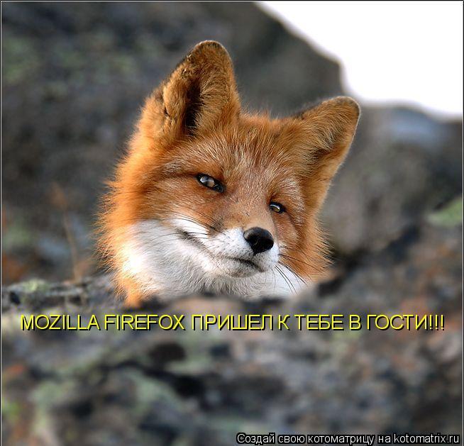 Котоматрица: MOZILLA FIREFOX ПРИШЕЛ К ТЕБЕ В ГОСТИ!!!