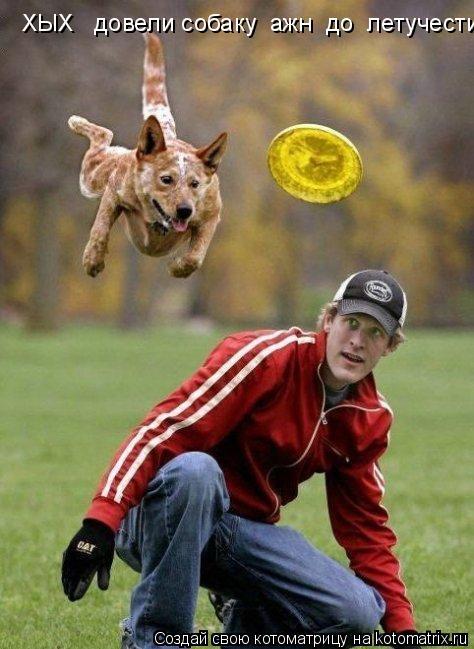 Котоматрица: ХЫХ   довели собаку  ажн  до  летучести!