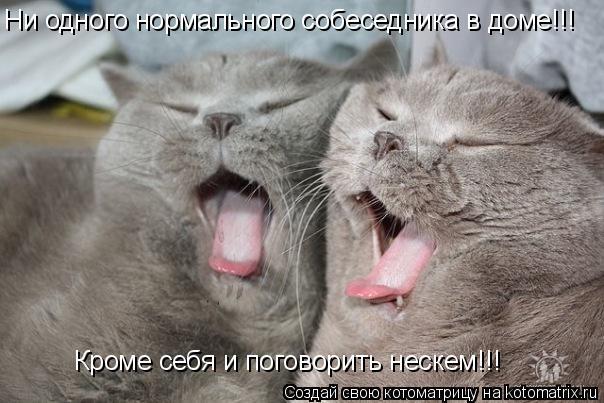 Котоматрица: Ни одного нормального собеседника в доме!!! Кроме себя и поговорить нескем!!!