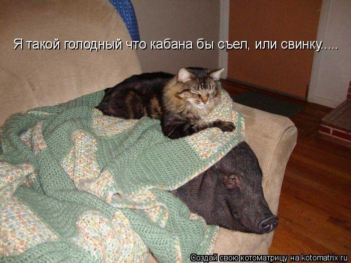 Котоматрица: Я такой голодный что кабана бы съел, или свинку.....