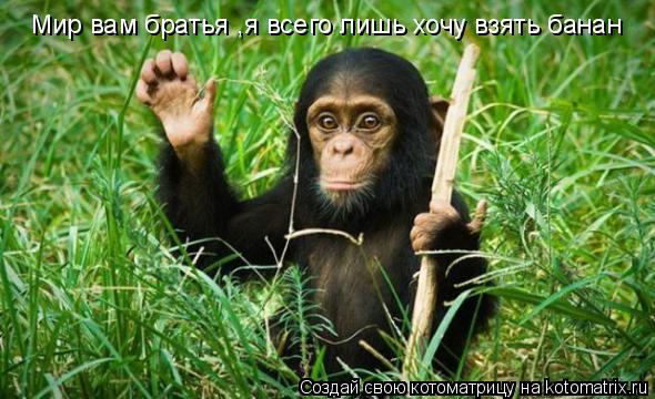 Котоматрица: Мир вам братья ,я всего лишь хочу взять банан