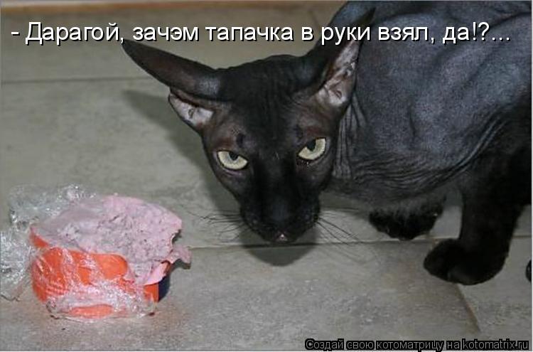 Котоматрица: - Дарагой, зачэм тапачка в руки взял, да!?...