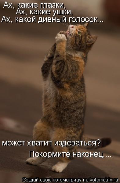 Котоматрица: Ах, какие глазки, Ах, какие ушки, Ах, какой дивный голосок... может хватит издеваться? Покормите наконец.....