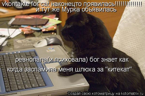 "Котоматрица: vkontakte for cat наконецто появилась!!!!!!!!!!!!!! и тут же Мурка обьявилась ревнолала(и психовала) бог знает как когда заспамила меня шлюха за ""ките"
