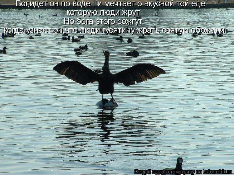 Котоматрица: Бог,идет он по воде...и мечтает о вкусной той еде которую люди жрут Но бога этого сожгут когда узнает он,что люди гусятину жрать святую обожа