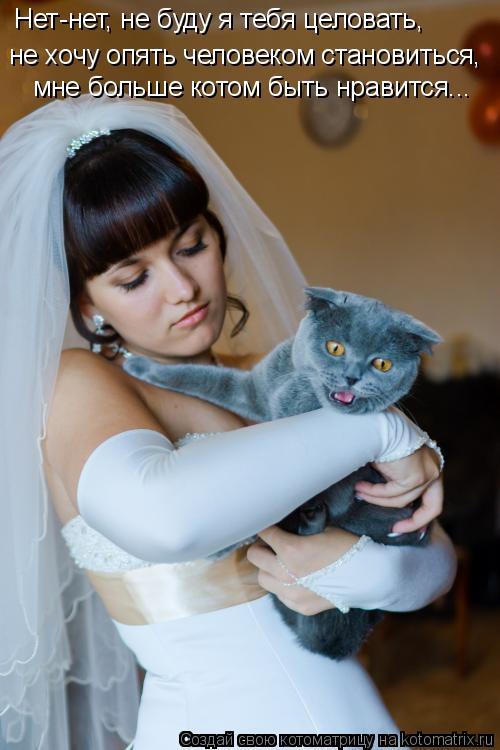 Котоматрица: Нет-нет, не буду я тебя целовать, не хочу опять человеком становиться, мне больше котом быть нравится...