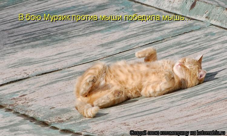 Котоматрица: В бою Мурзик против мыши победила мышь...
