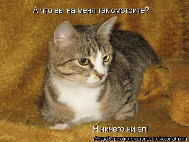 Котоматрица: А что вы на меня так смотрите? Я ничего ни ел!
