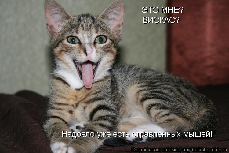 Котоматрица: ЭТО МНЕ? ВИСКАС? Надоело уже есть отравленных мышей!