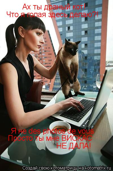 Котоматрица: Ах ты драный кот! Что я голая здесь делаю?! Я не des photos de vous Просто ты мне ВИСКАС  НЕ ДАЛА!