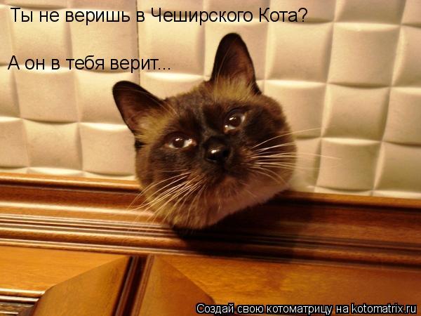 Котоматрица: Ты не веришь в Чеширского Кота? А он в тебя верит...