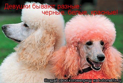 Котоматрица: Девушки бывают разные: черные, белые, красные!