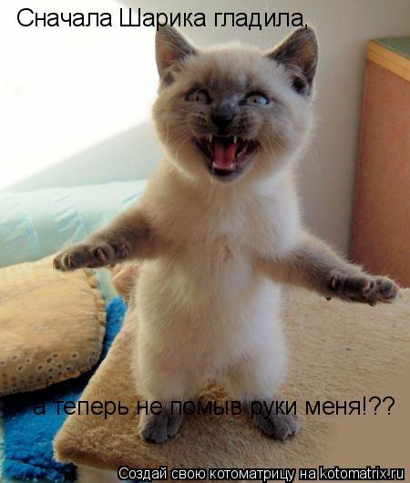 Котоматрица: Сначала Шарика гладила,  а теперь не помыв руки меня!??