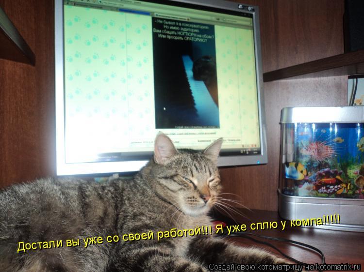 Котоматрица: Достали вы уже со своей работой!!! Я уже сплю у компа!!!!!