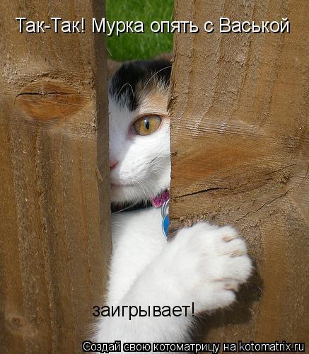 Котоматрица: Так-Так! Мурка опять с Васькой  заигрывает!