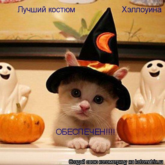 Котоматрица: Лучший костюм  Хэллоуина ОБЕСПЕЧЕН!!!!