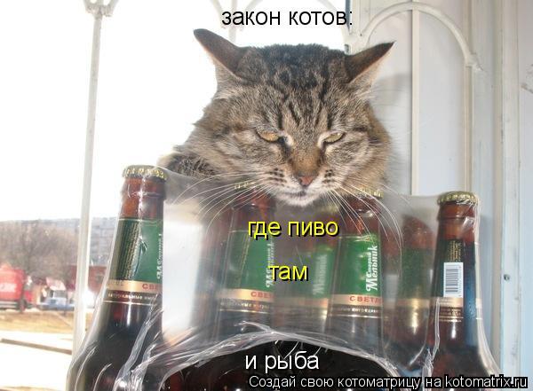 Котоматрица: закон котов: где пиво там и рыба