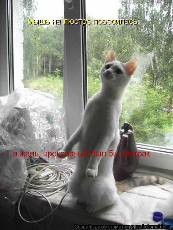 Котоматрица: мышь на люстре повесилась, а жаль, прекрасный был бы завтрак...
